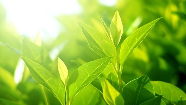 神的爱,绿叶,阳光