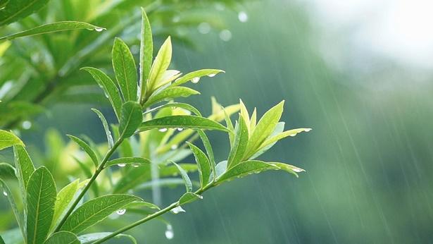 风雨中的小草