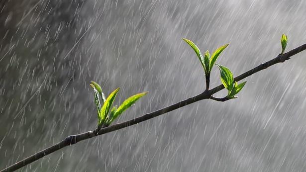 春雨,树枝,发芽