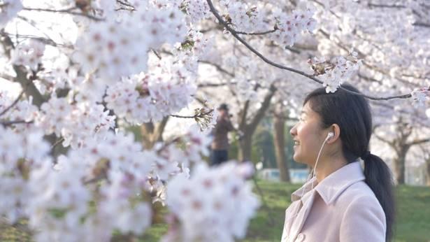 姊妹在看櫻花
